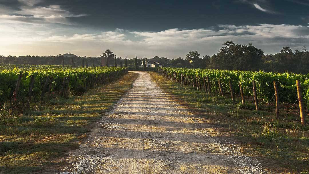 gravel driveway leading into a winery with vines