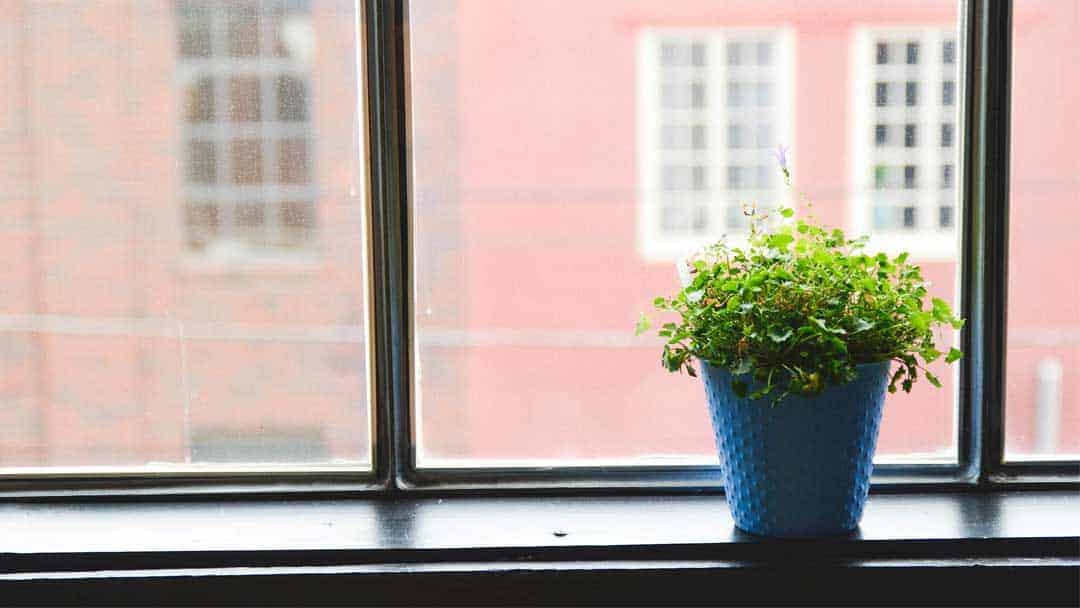 dark black window ledge with plant pot sitting on it